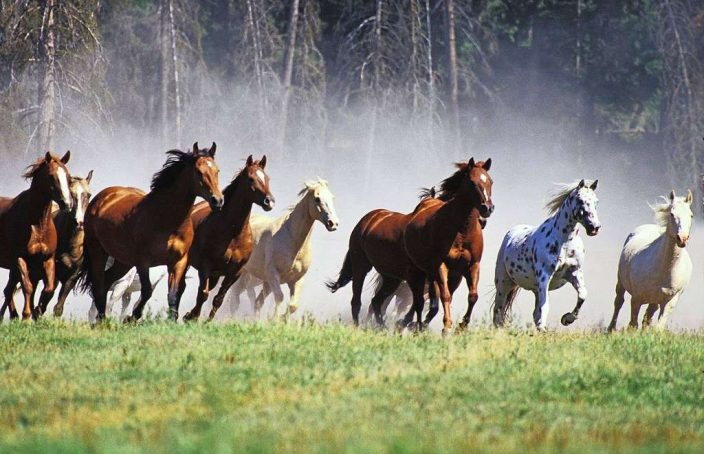 Wild horses are the metaphor for chaos in software project management. Harness and use their force for the project success.